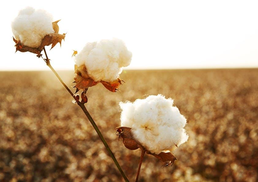 Die Poesie der Baumwolle – Teil 3